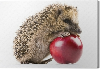 Tableau sur toile Happy hedgehog