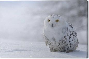 Tableau sur toile Harfang des neiges, assis sur la neige