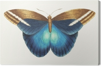 Tableau sur toile Illustration d'œuvres d'animaux