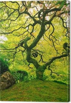 Tableau sur toile Incroyable Arbre Vert