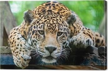 Tableau sur toile Jaguar Amérique du Sud