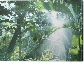 Tableau sur toile Jungle