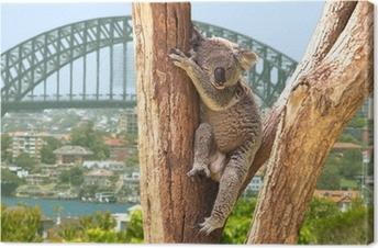 Tableau sur toile Koala mignon à Sydney, Australie