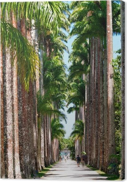 Tableau sur toile L\'allée de palme dans le jardin botanique de Rio ...