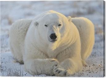Tableau sur toile L'ours polaire se trouvant à la toundra.