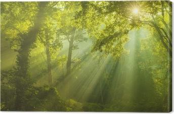 Tableau sur toile La forêt du paradis