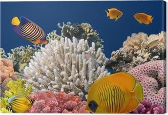 Tableau sur toile La vie sous-marine d'un récif de corail dur, Mer Rouge, Egypte