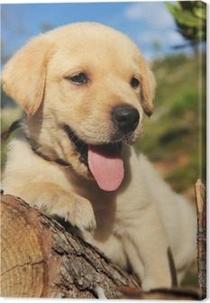 Tableau sur toile Labrador chiot