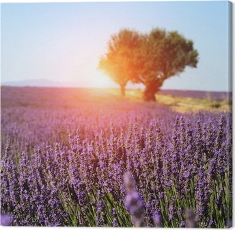 Tableau sur toile Lavender field in Provence, France