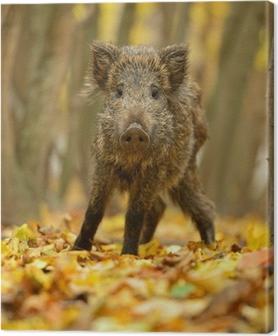 Tableau sur toile Le cochon sauvage