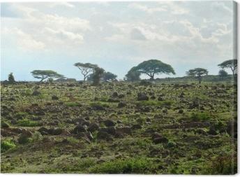 Tableau sur toile Le paysage nature du Kenya. Kenya. Afrique.