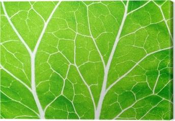 Tableau sur toile Leaf green