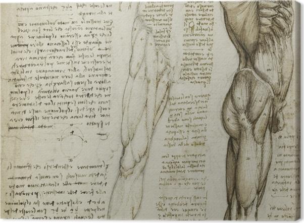 Tableau sur toile Léonard de Vinci - L'étude anatomique - Reproductions