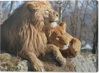 Tableau sur toile Leone e leonessa