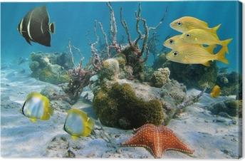 Tableau sur toile Les poissons et les étoiles de mer