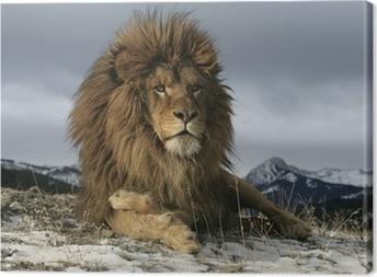 Tableau sur toile Lion de Barbarie, Panthera leo leo