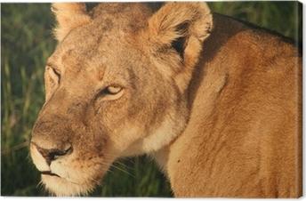 Tableau sur toile Lion Masai Mara au Kenya