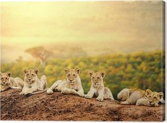 Tableau sur toile Lionceaux attente ensemble.