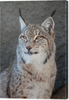 Tableau sur toile Lynx