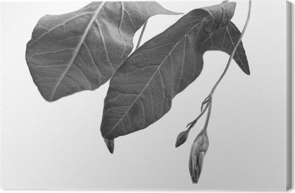 tableau sur toile macrograph noir et blanc de l 39 objet de la plante avec la profondeur de champ. Black Bedroom Furniture Sets. Home Design Ideas