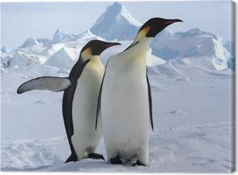 Tableau sur toile Mais où est le pôle sud ? (Manchots Empereurs/Antarctique)