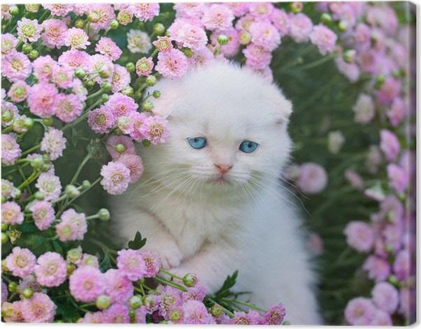 tableau sur toile mignon petit chaton blanc cossais fois assis dans la fleur pelouse pixers. Black Bedroom Furniture Sets. Home Design Ideas