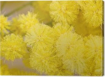Tableau sur toile Mimosa