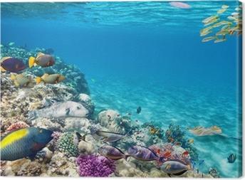 Tableau sur toile Monde sous-marin avec des coraux et des poissons tropicaux.