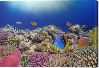 Tableau sur toile Monde sous-marin. Poissons coralliens de la mer Rouge.