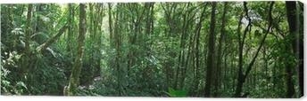 Tableau sur toile Nuage forêt au Costa Rica