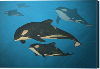 Tableau sur toile Orca famille