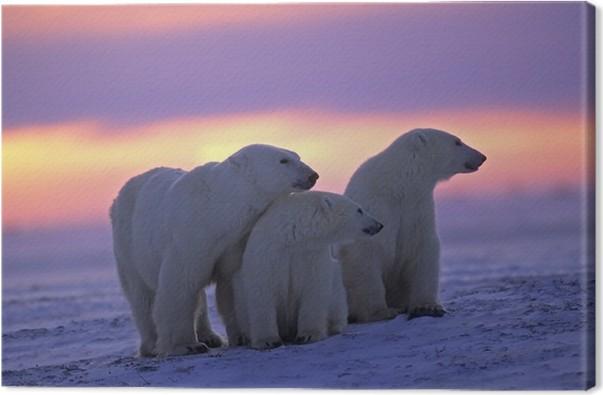 tableau sur toile ours blanc avec ses petits au coucher du soleil dans l 39 arctique canadien. Black Bedroom Furniture Sets. Home Design Ideas