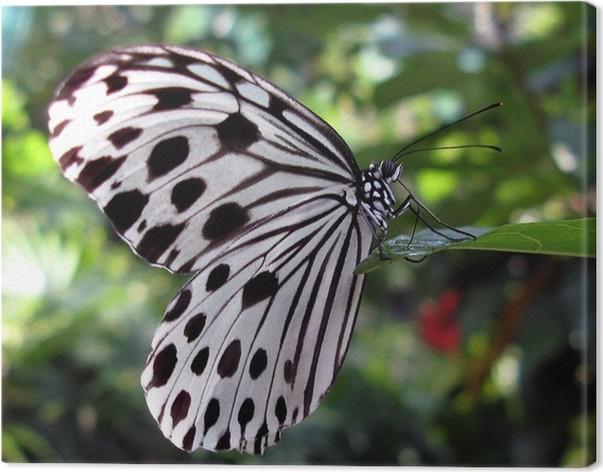 tableau sur toile papillon blanc avec des points noirs pixers nous vivons pour changer. Black Bedroom Furniture Sets. Home Design Ideas