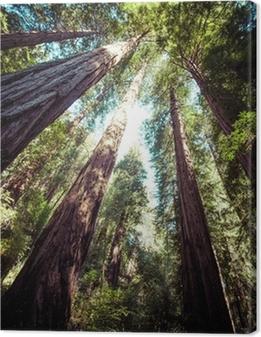 Tableau sur toile Parc national de séquoia en Californie, USA