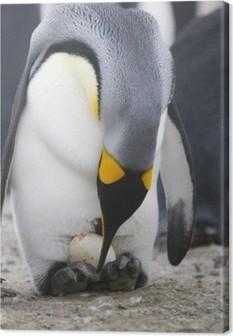Tableau sur toile Pingouin avec l'oeuf