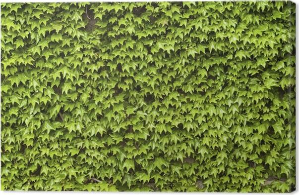 Tableau sur toile plantes grimpantes vertes sur mur de la - Accrocher toile au mur ...