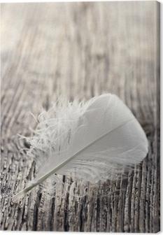 Tableau sur toile Plume blanche