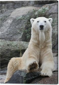 Tableau sur toile Polar bear portrait.