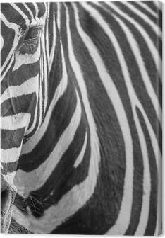Tableau sur toile Portrait animale de zèbre