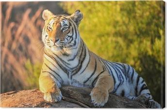 Tableau sur toile Portrait d'un tigre