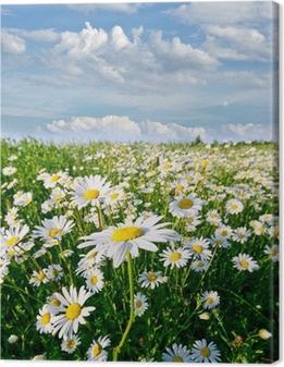Tableau sur toile Printemps: champ de fleurs de marguerite avec le ciel bleu et les nuages