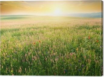 Tableau sur toile Printemps pré de fleurs de violette