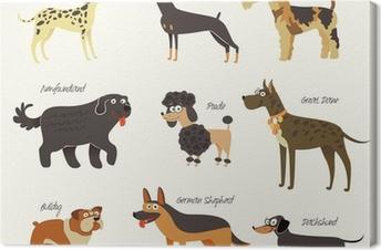 Tableau sur toile Races de chien