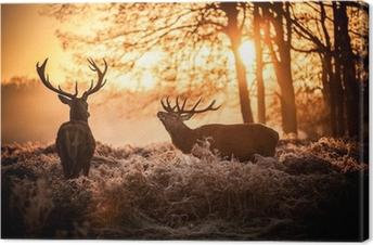 Tableau sur Toile Red Deer au soleil du matin.