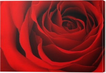 Tableau sur toile Red rose