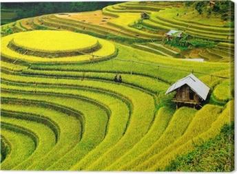 Tableau sur toile Rizières en terrasses au vietnam