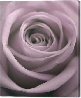Tableau sur toile Rose pastel