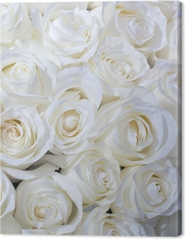Tableau sur toile Roses blanches fond