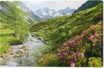 Tableau sur toile Roses des Alpes sur un ruisseau de haute montagne