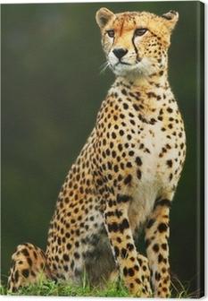 Tableau sur toile Sauvage africain guépard